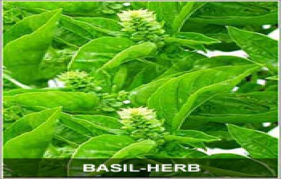 Herbs for Vitiligo Treatment